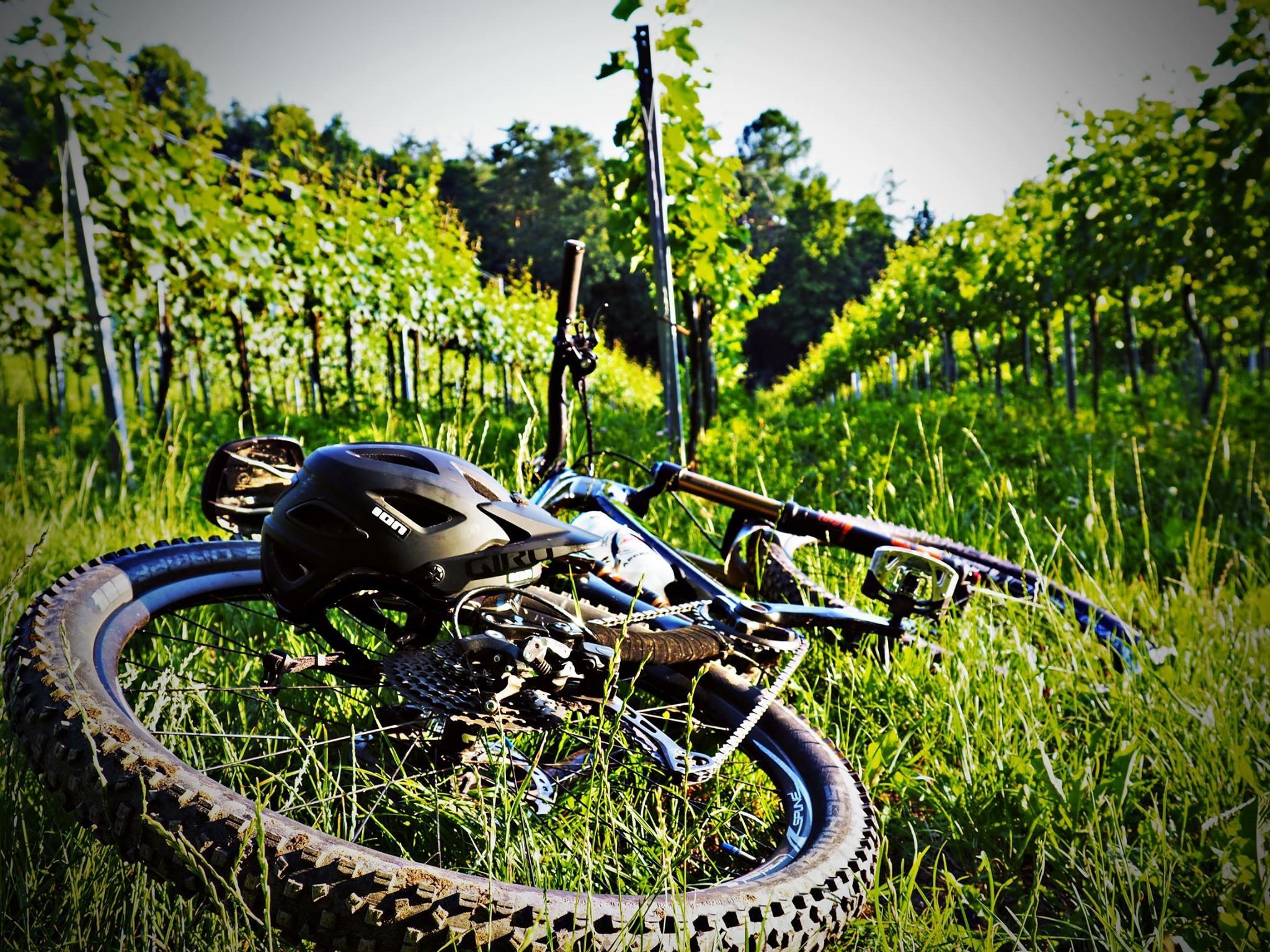 Pause in den Weinbergen mit dem Mountainbike.