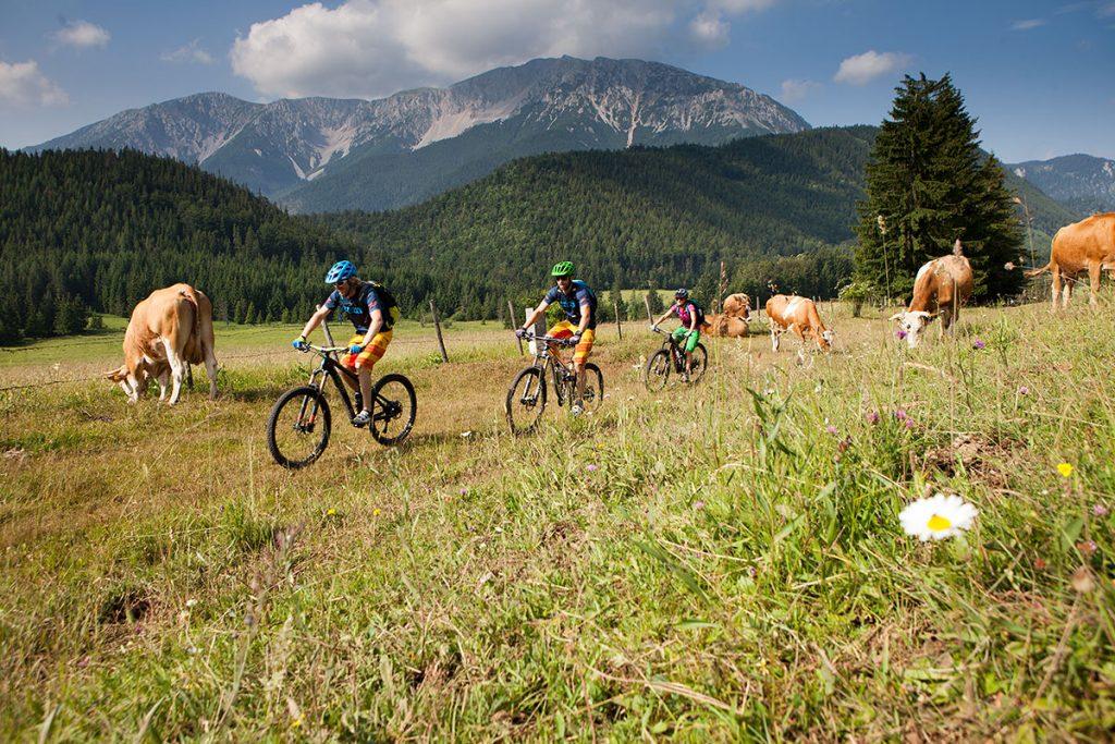 Ausflug mit dem Mountainbike im niederösterreichischen Piesting.
